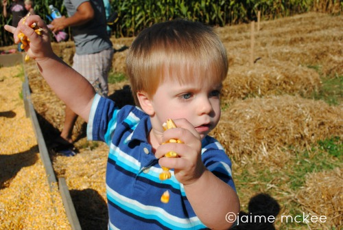 Why you should visit the Eliada corn maze