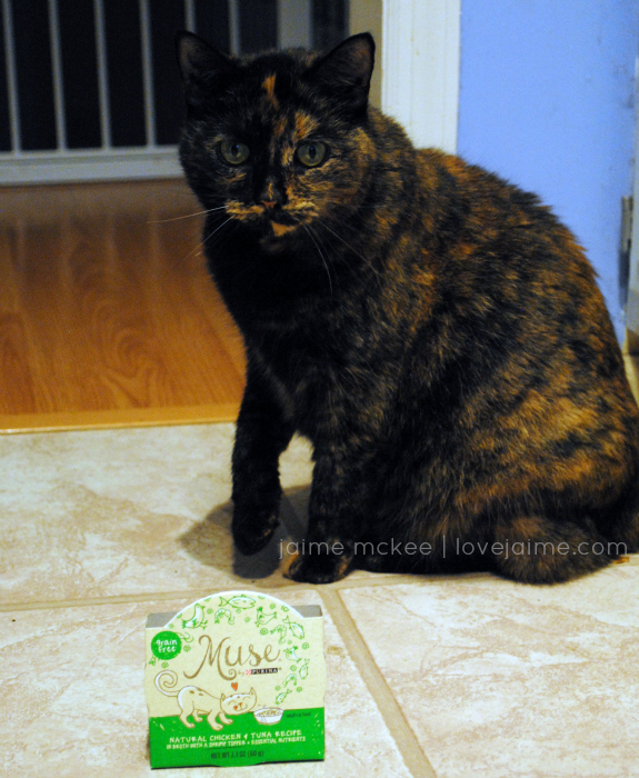 Keeping my cat happy with Purina Muse Natural Cat Food #MyCatMyMuse @MuseCatFood #ad