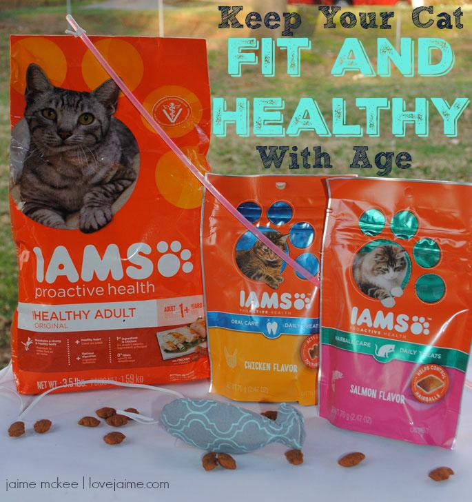 Best Food For Overweight Indoor Cat