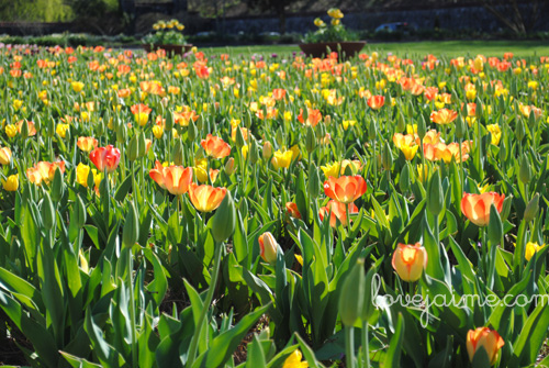 biltmore_spring1