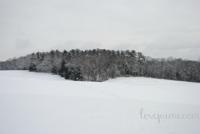 snow022615_4