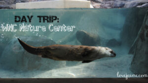 Adventure at the WNC Nature Center @friendswildwnc #avlfun