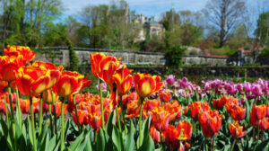 Biltmore Estate in the spring #BiltmoreBlooms