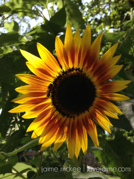 friday5_sunflower