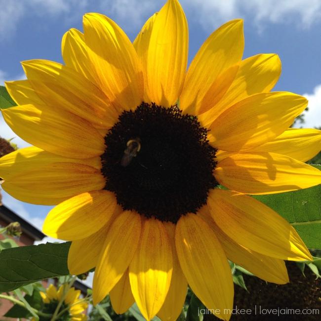 friday5_sunflower