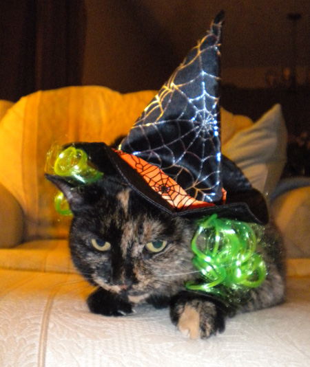 halloween_cat_witch