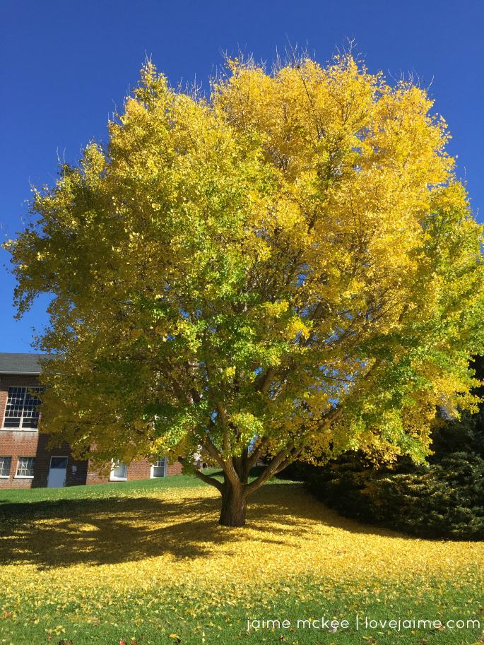 fall-color-mhu
