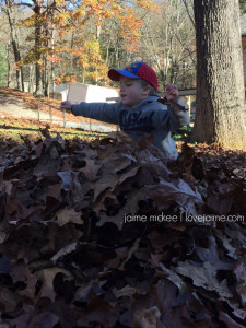 wordless Wednesday: All the leaves