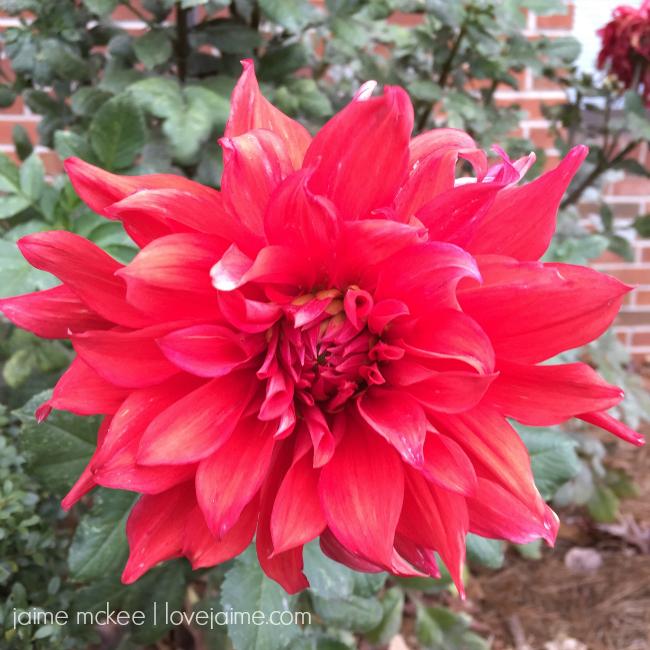 friday5_flower_fall