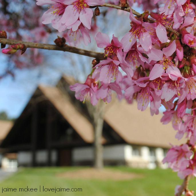 Spring has sprung…maybe? {week 88} #springtime #SOC #blogging