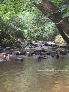 Bent Creek Hike in Asheville NC