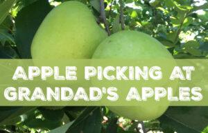 Apple orchard visit to Grandad's Apples!