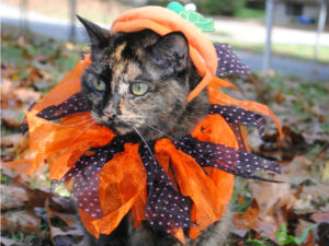 Ways to enjoy fall weather with your cat #MuseCleanPlate #ad