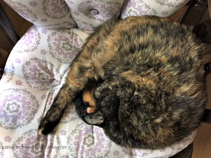 Self care tips I learned from my cat