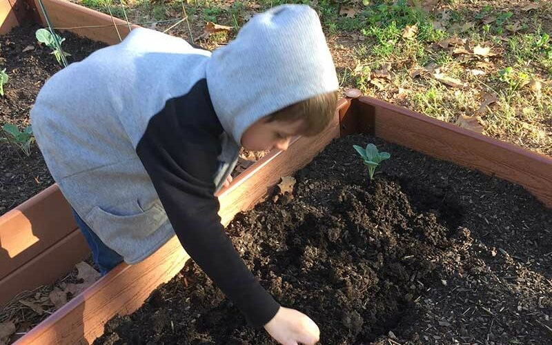 How To Get Kids Involved in the Family Garden with Harvest Organics