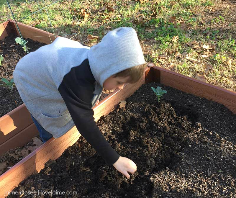 How To Get Kids Involved in the Family Garden with Harvest Organics #TheHarvestEffect #ad