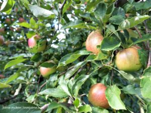 Sky Top Orchard – Field Trip Time!